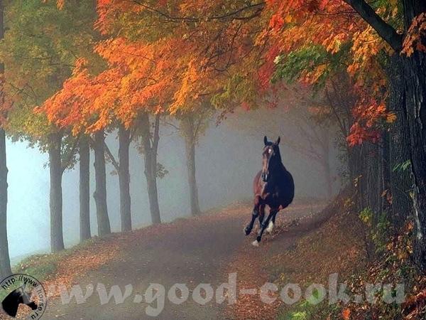 Для любителей лошадей и кошек