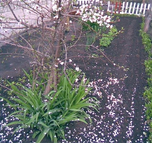 А вот немного и нашей весны - 4
