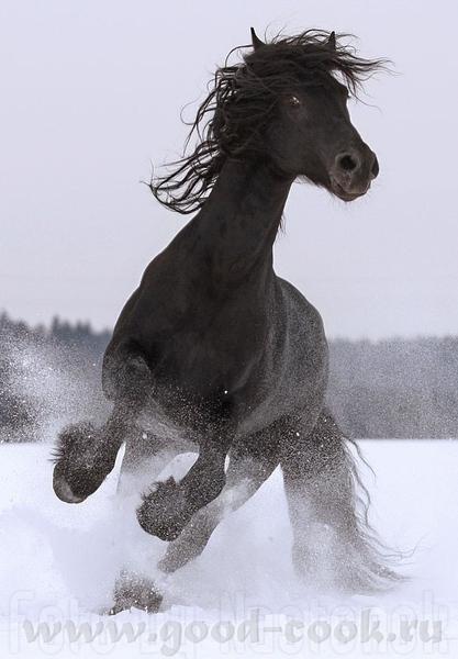 Девочки, мальчики, кто любит коней, это вам