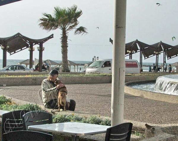 Наше внимание привлек пожилой мужчина с собакой, что сидели на бордюрчике напротив кафе