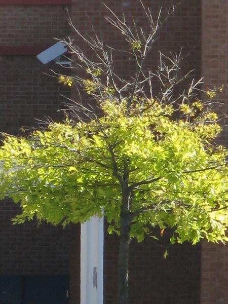 Принесла пару фото с выходных, уже видно начало осени, но пока тепло и солнечно - 3