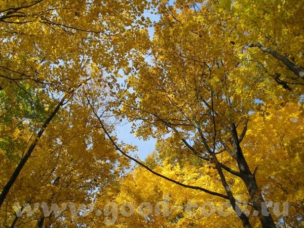 Осень в Онтарио (Канада) - 2
