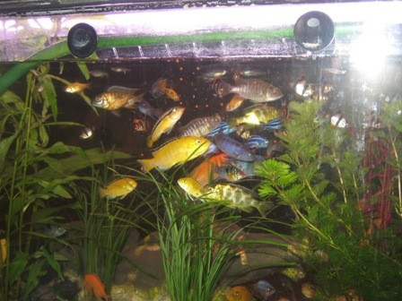 Привет аквариумисты - 3