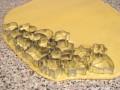 Опять тот же сайт: Рецепт от Скрипкиной Анастасии Новогоднее печенье на елку Ингредиенты 200 г слив... - 2