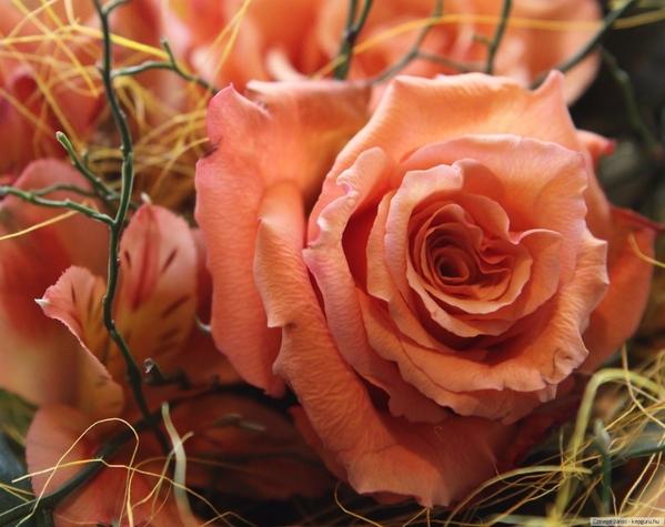 Та же роза но