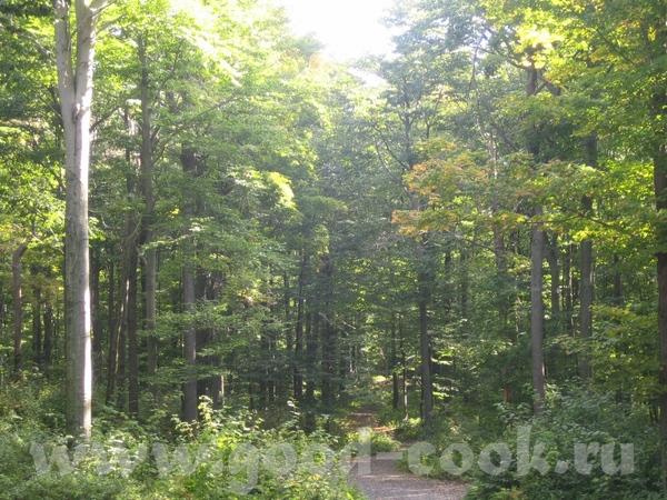 У наших друзей там дом с большим участком земли прямо в лесу