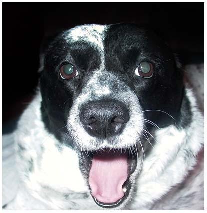наша Люська - собака
