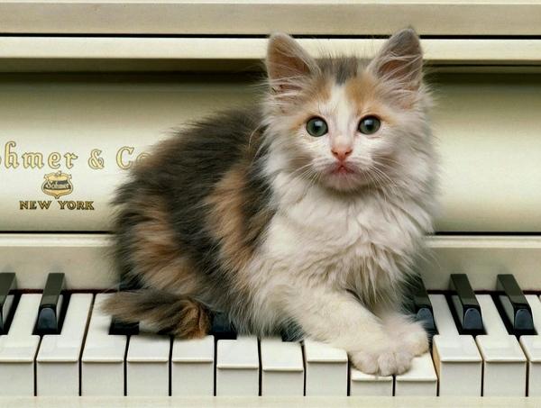 Кому кошки нужны Кошкин форум - 2
