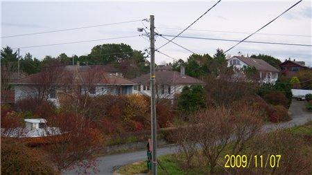 вот такие отголоски осени, из нашего сада+ маленький шторм-последствия
