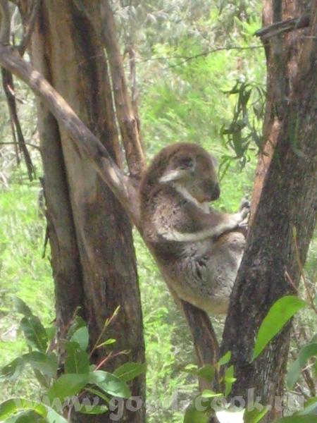 хотелось бы показать несколько забавных фотографий в дополнение к теме о зоопарке - 2