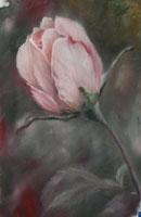Уроки по рисованию Рисуем цветными карандашами Магнолия - урок от Михаила Рисуем цветы от Михаила У... - 4