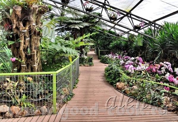 Среди растений стоят скамейки, где можно присесть отдохнуть и полюбоваться окружающей красотой - 2