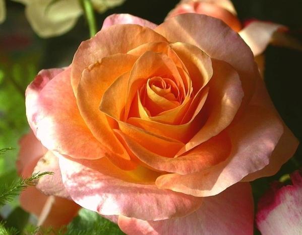 Ето вам красота и всем Ага- красиво, спасибо Ну ничего, можно чуть пожже сделать то что xотите А сс...