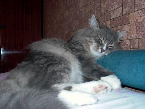 Я по своему коту скучаю, эх, такая же сво