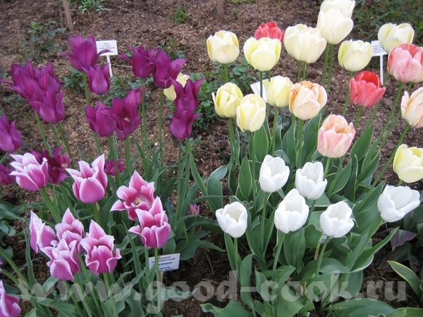 Покажу ещё несколько фоток с цветами из того-же скверика мне фотка понравилась с геоцинтами Танюш,... - 5