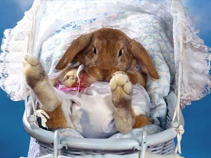 Вот мой приколист Суп с котом или кот с супом поздравляю с новорожденными крольчатами - 2