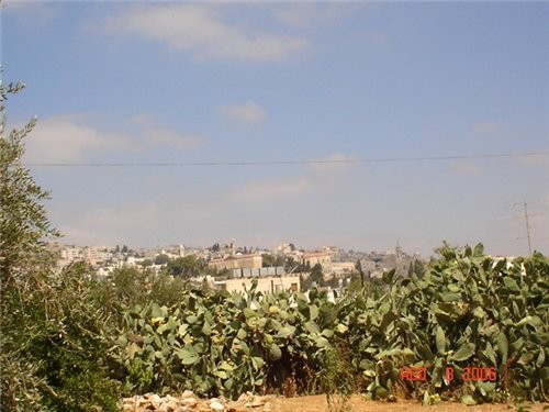 Это кактусы на фоне Бейт-Жала - 2