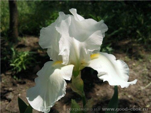 Светик, цветы потрясающие