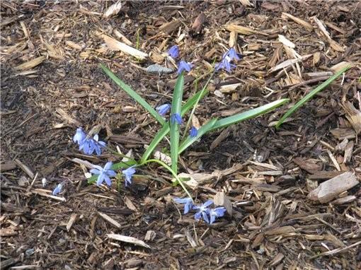 весна пришла и к нам, первые цветущие деревья и цветы в ботаническом саду, запахи стоят я вам скажу... - 6