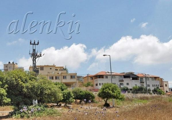 Раскидистые холмы Кармеля, усеянные ливанскими кедрами, фисташковыми деревьями успокаивают глаза, у... - 3