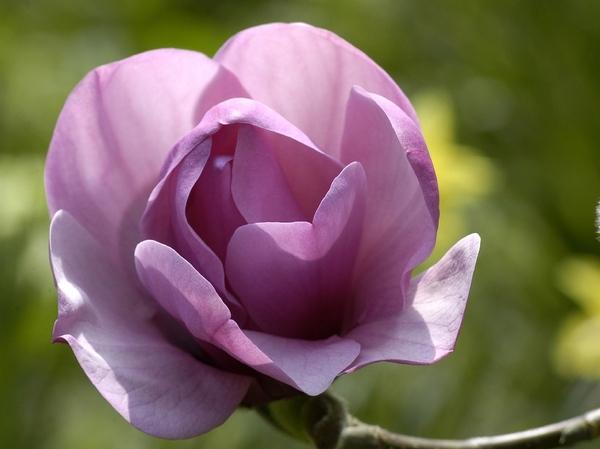 Так ведь это очень xорошо что появилось больше народа- форум на то и держится Весна, цветут магноли... - 7