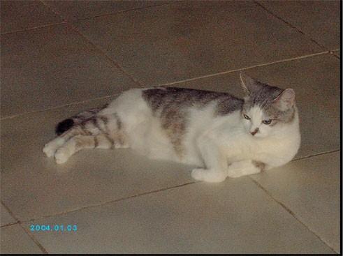 , Сауле, котёнок какой чудный - лапушка маленькая прямо - 2