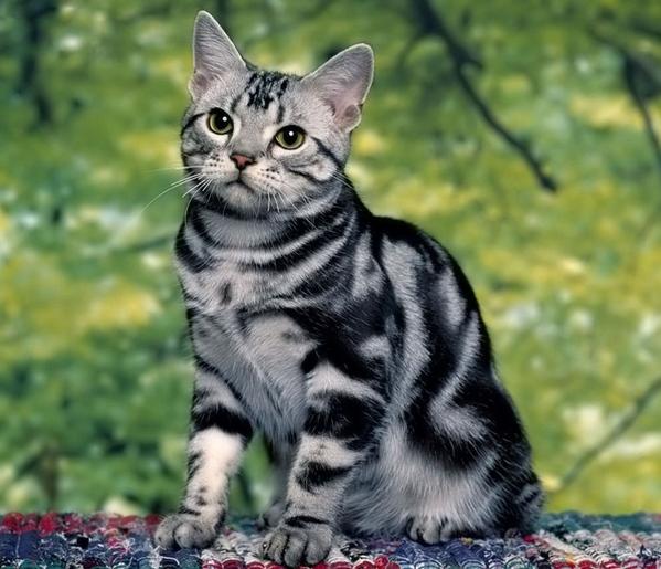 Кому кошки нужны Кошкин форум - 8