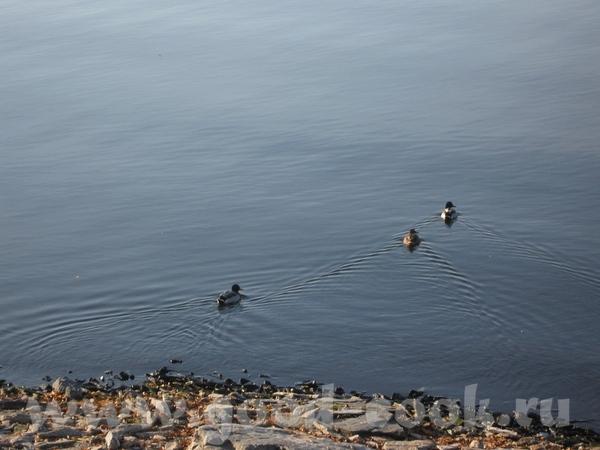 озеро Иртяш утки сидели на берегу мы с Костей - 3