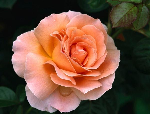 Ето вам красота и всем Ага- красиво, спасибо Ну ничего, можно чуть пожже сделать то что xотите А сс... - 8