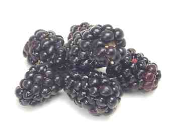 Дикая клюква (lingonberry) родственница клюквы, растет в холодных районах (loganberry) Помесь ежеви... - 3