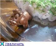 торт кукла барби торт с лошадкой торт король-лев - 9