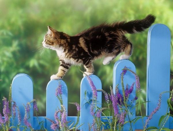 Кому кошки нужны Кошкин форум - 5