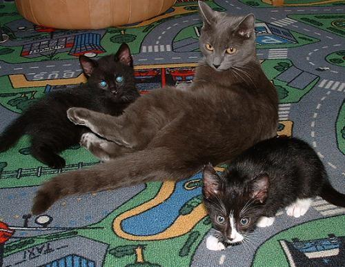 Котенка забрала однокласница родственницы, я постоянно интересуюсь, говорит, что все нормально, обе... - 2