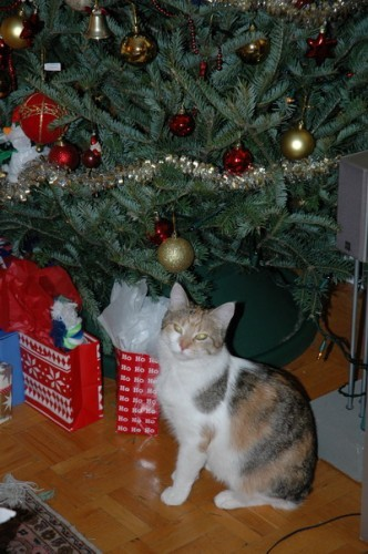 Лизка охраняет новогодние подарки А тут видать пытается куда-то отправиться в своеобразном паровози...