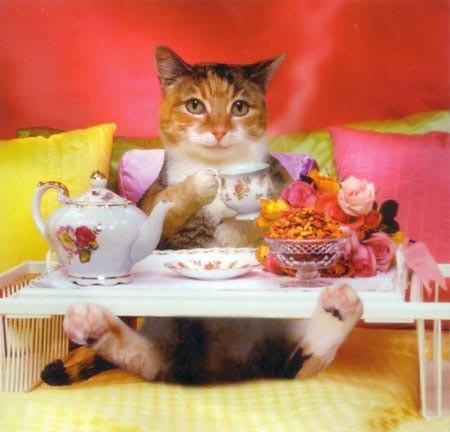 С новым домиком вас, девчонки