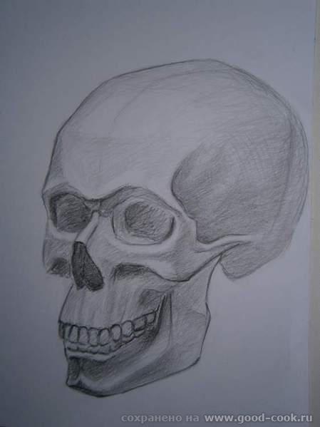 череп2