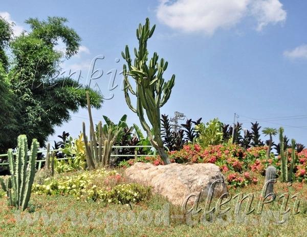Недалеко от водоема возвышается холм с кактусами