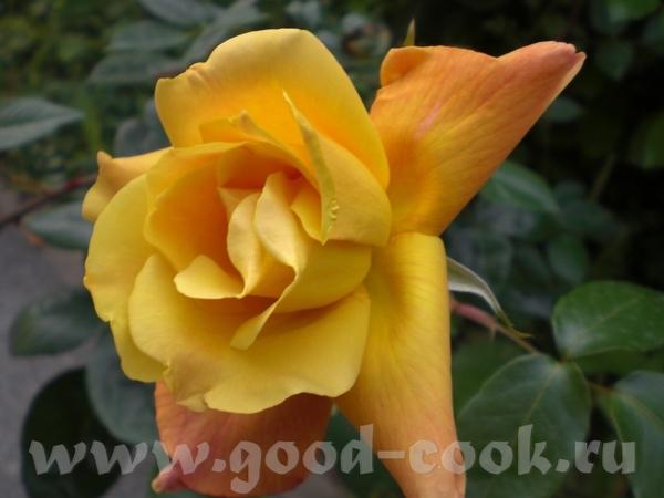 Цветет рододендрон: Возде дома расцветают розы: Вечное и прекрасное небо: - 3
