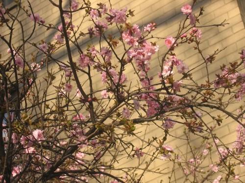 Но больше всего люблю когда цветут древья