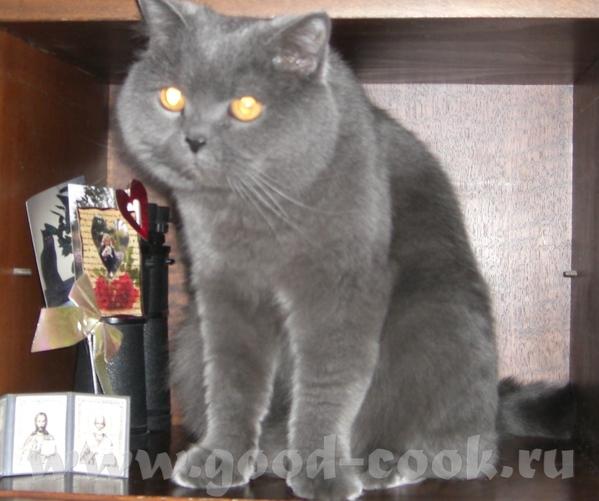 Это наш любимый и не повторимый кот Пуба