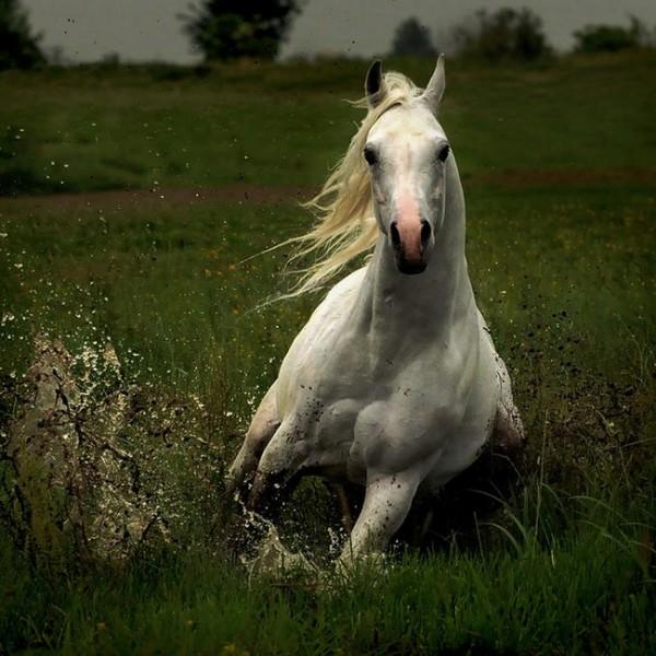кому лошадок