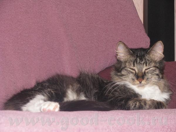 Здравствуйте, знакомтесь мои бандитки старшая, мама в мороз подобрала беременную кошку, Буся родила...
