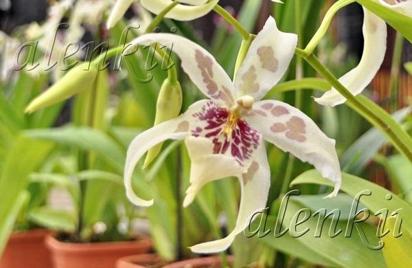 Здесь можно купить и орхидеи