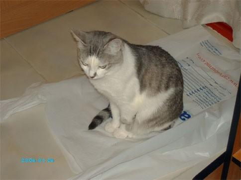 Любочка, классные какие котятки - чудо