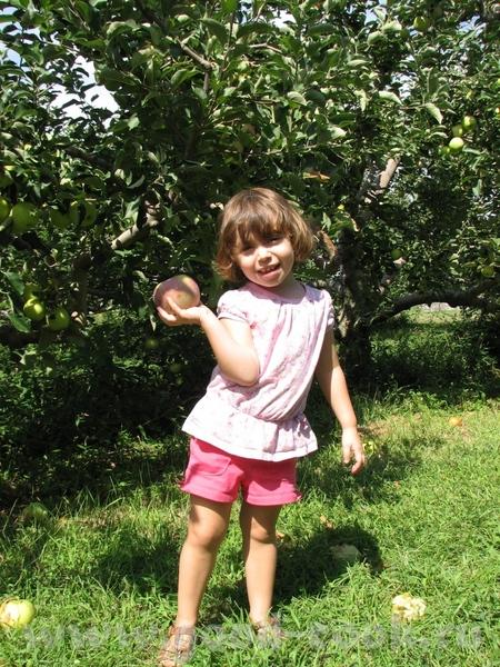 Пока вы тут оргвопросы решаете я в местном колхозе урожай собирала(жалко персики уже отошли) - 2