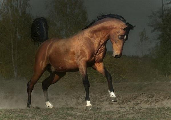 кому лошадок - 5