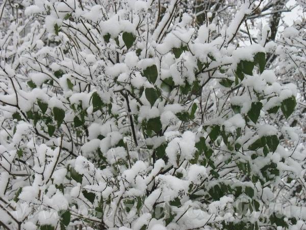 А сегодня у нас случилась зима - 2