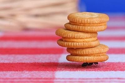 Наверное, сам пёк печеньки: - 2
