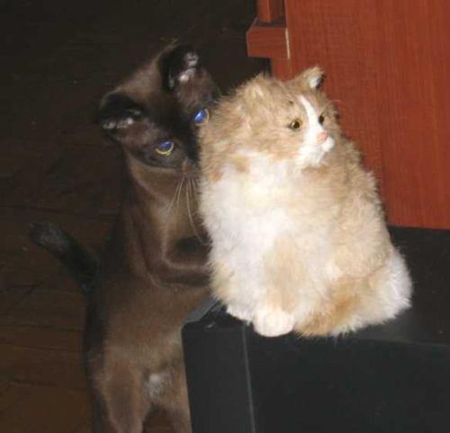 Наш КотоFun любит играть с этой кошкой, у которой шерсть из кролика