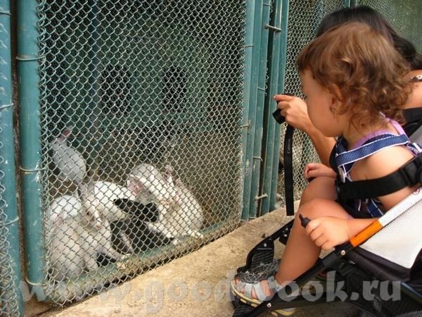 Маленький зоопарк расположен за детскими домиками